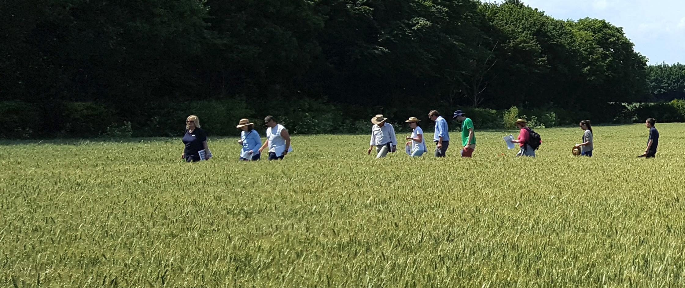 Tina field Crop2