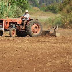 daniella farmer
